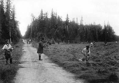 Сенокос. Фото Я.Лейцингера, 1899