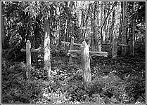 Кладбище времен СЛОНа в соловецком лесу. Фото конца 1980-х гг.