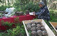 Недопустимое проведение раскопок на Секирной горе. Фото 2006 г.