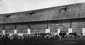 Скотный двор. Фото 1920-х гг.