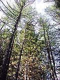 Варваринский лесной питомник