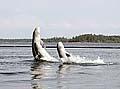Илл. 5. Дельфинарий в Долгой губе (2002 г.)